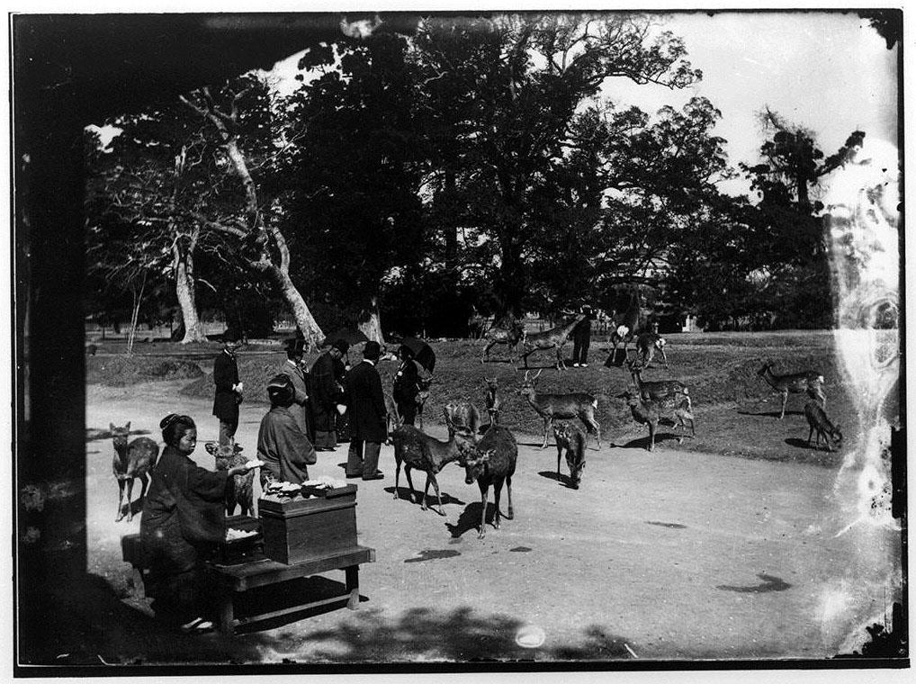作品画像:公園の鹿