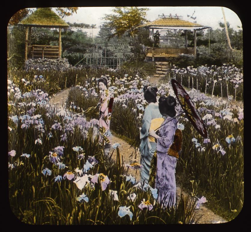 作品画像:菖蒲園の女性たち