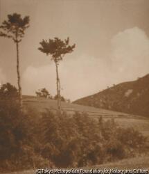 作品画像:丘の上の風景
