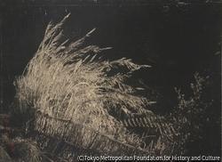 作品画像:風に吹る芦