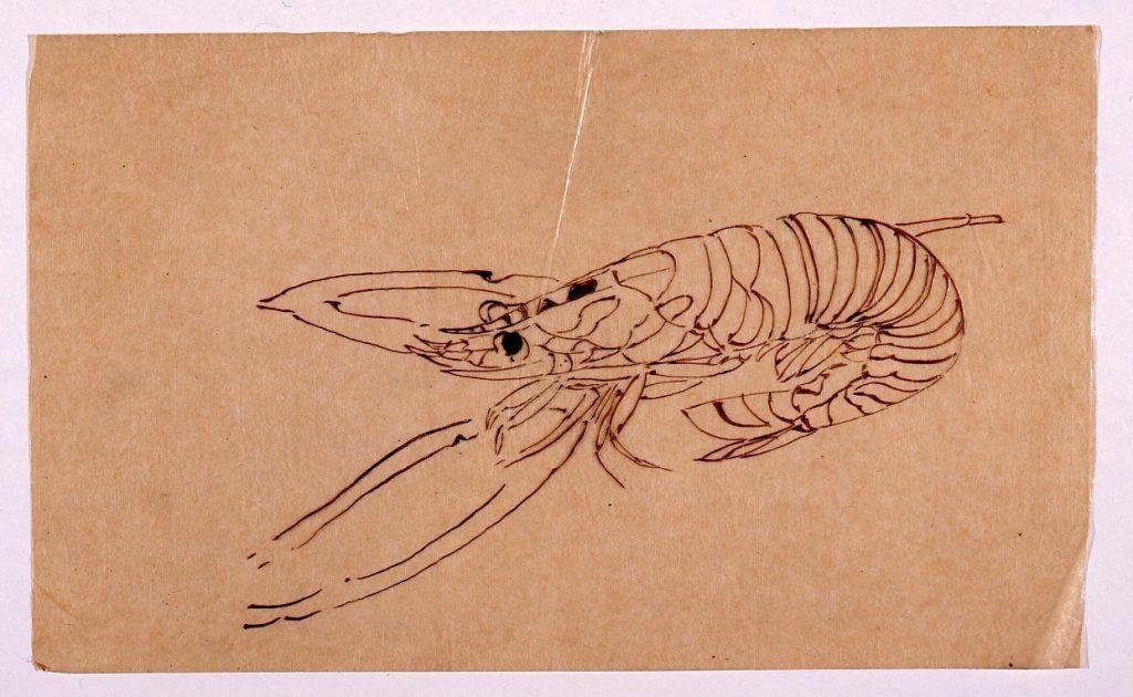 作品画像:下絵 笹に海老