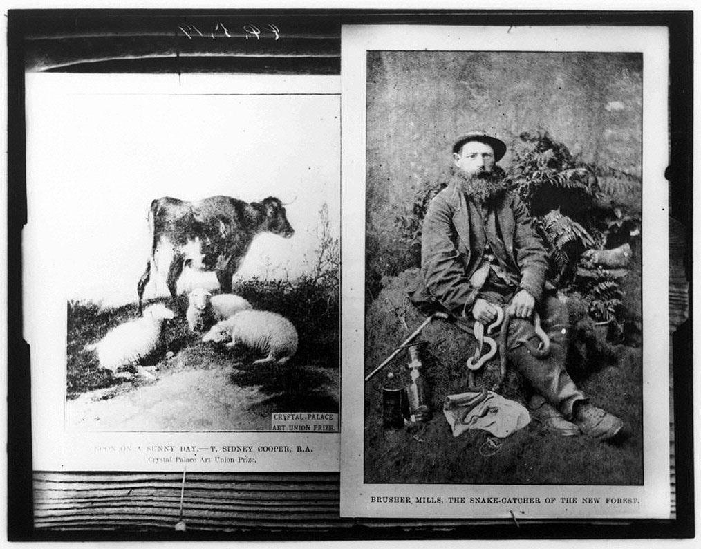 作品画像:西欧カード2枚(男性像と牛・羊)