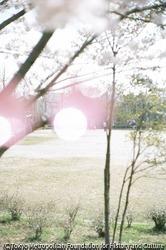 作品画像:いわき市、福島