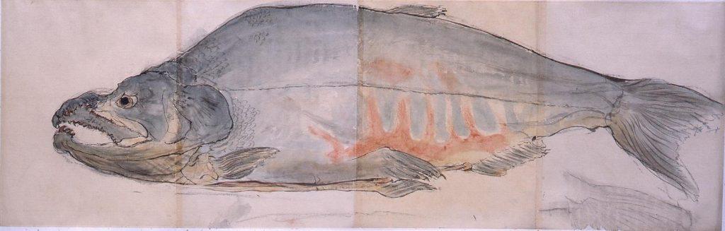 作品画像:粉本 鮭