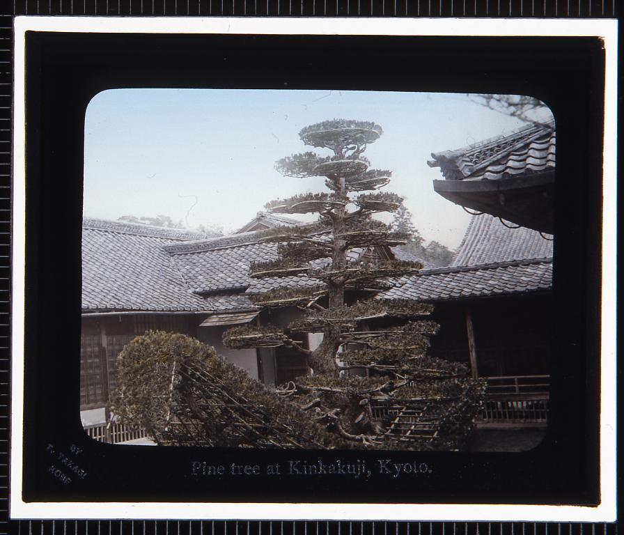 作品画像:京都 金閣寺陸船松(幻灯原板)