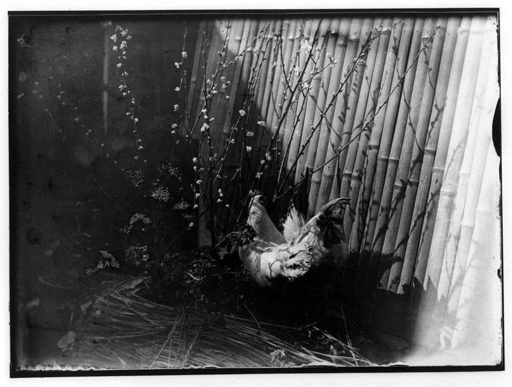 作品画像:梅花と雌雄鶏