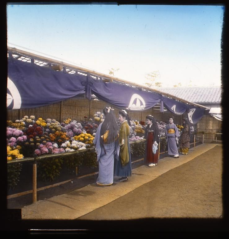 作品画像:観菊の女性たち