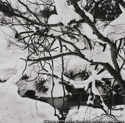 作品画像:鳥追い 水浴びする河原