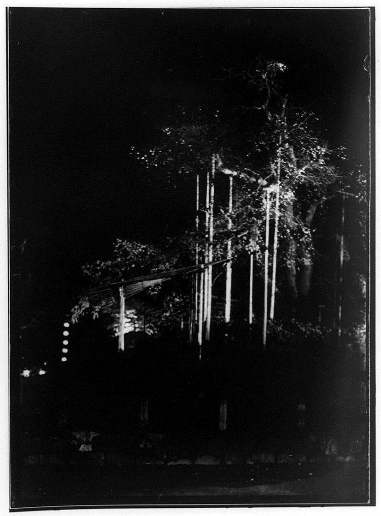 作品画像:円山公園しだれ桜夜景