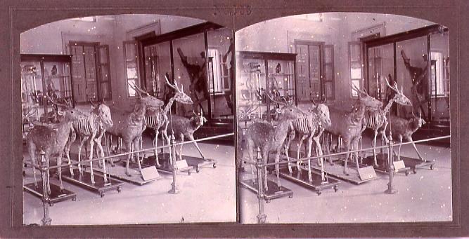作品画像:新嘉坡博物館(三)(No.153)