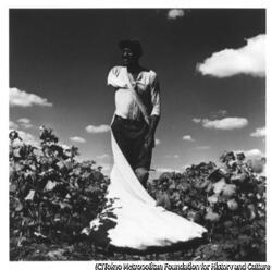 作品画像:ヴィクスバーグ、綿摘み