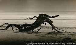 作品画像:オブジェ - 曇り日の海濱