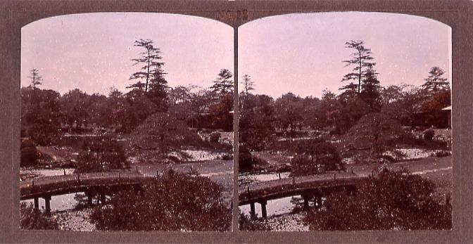 作品画像:東京植物園(小石川植物園)(二)(No.22)