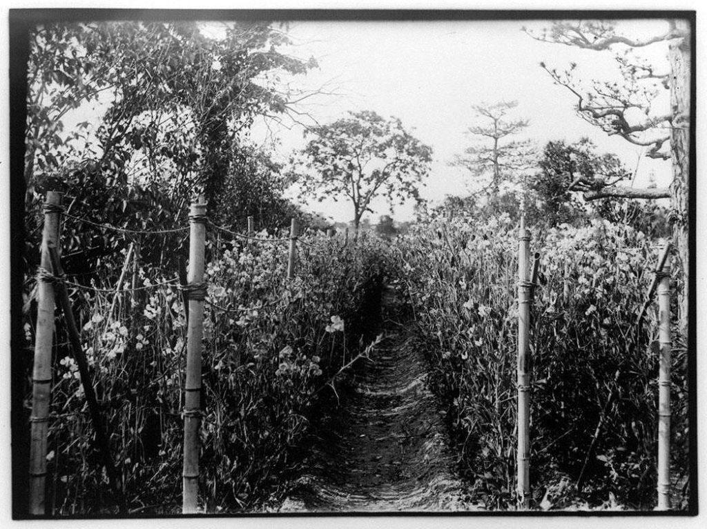 作品画像:畑の小道
