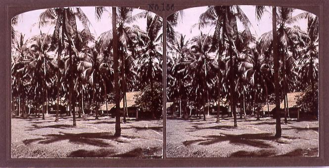 作品画像:椰子林(No.156)