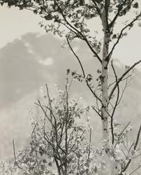 作品画像:(木々)