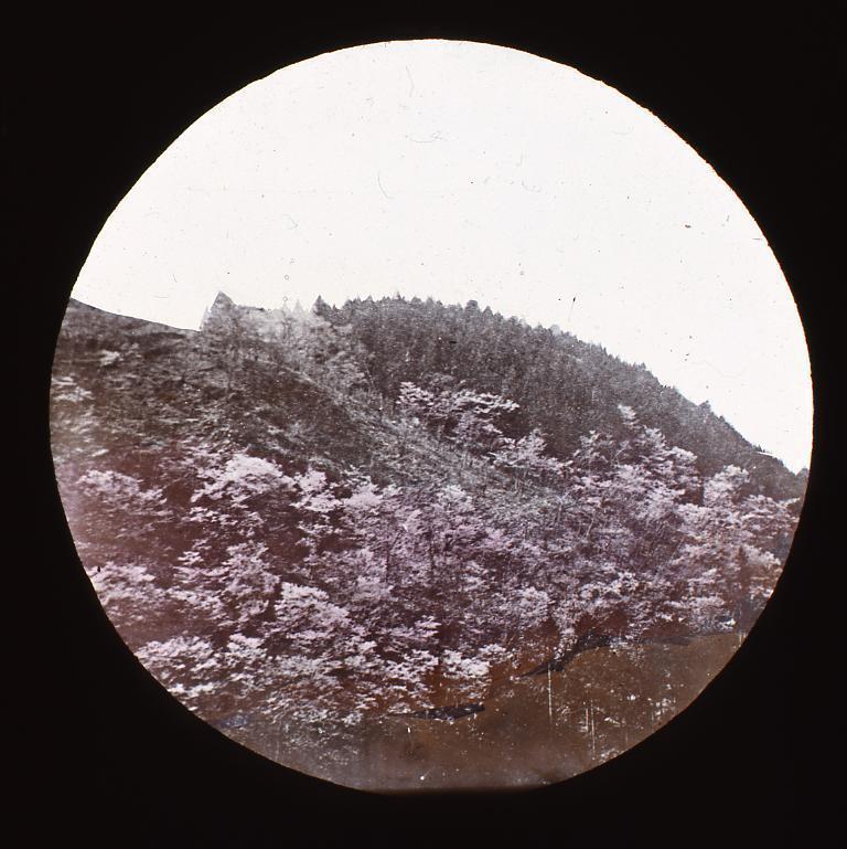 作品画像:名所 吉野 子本 桜