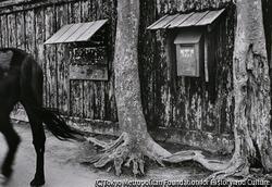 作品画像:秋田市追分・板塀