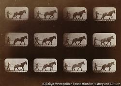作品画像:馬と人間