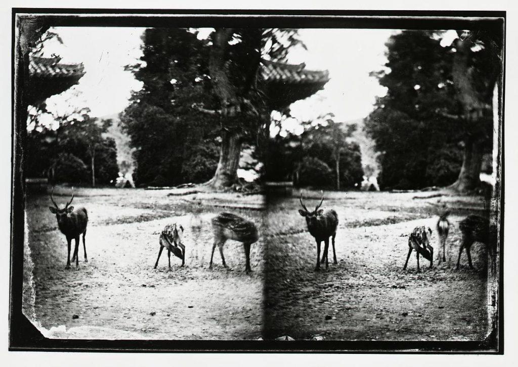 作品画像:春日の鹿