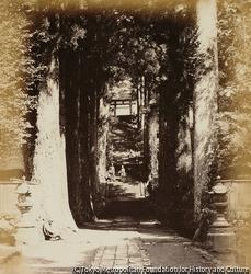 作品画像:並木道、高さ120フィート、箱根の寺