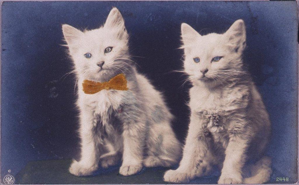 作品画像:2匹の白猫