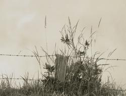作品画像:ひと叢の雑草