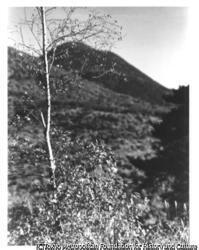 作品画像:木と山