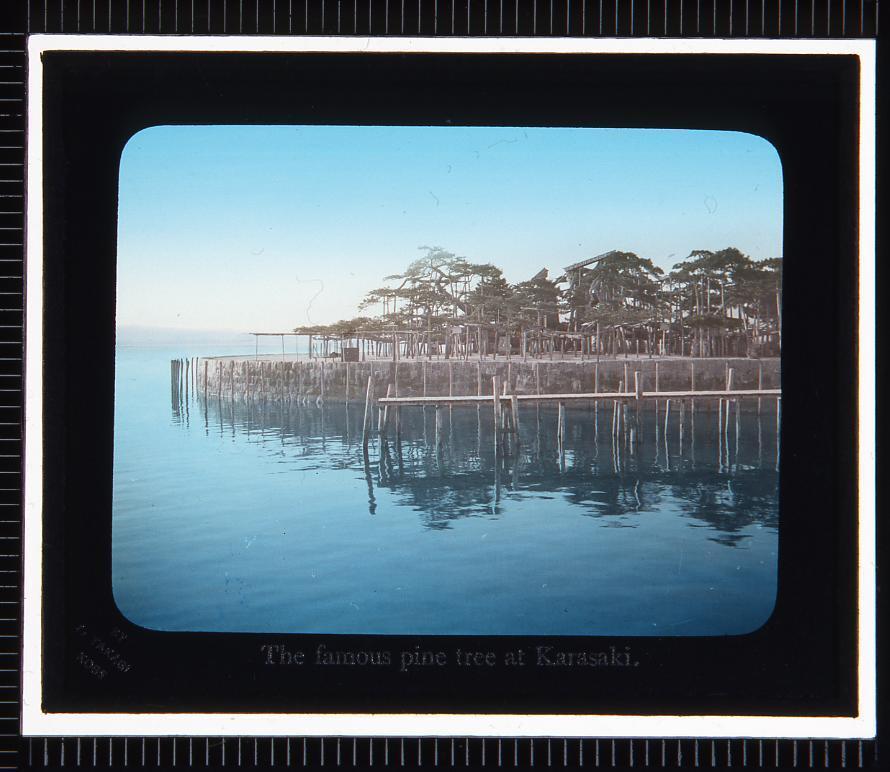 作品画像:琵琶湖 唐崎松(幻灯原板)