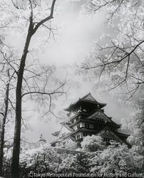 作品画像:新緑の大阪城
