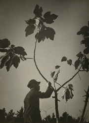 作品画像:(植物と人)