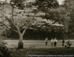 作品画像:秋景