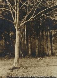 作品画像:森の夕日