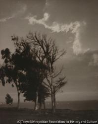 作品画像:(海岸沿いの木々)