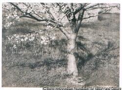 作品画像:桜