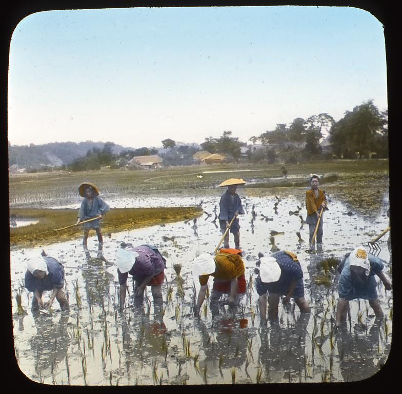 作品画像:田植えをする女性たち