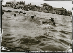 作品画像:両津の七夕祭りが加茂湖で行われた。人間の競泳大会の他に、佐渡牛や豚も泳ぐ