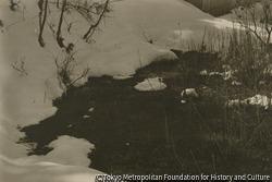 作品画像:雪と草