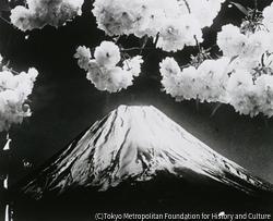 作品画像:富士と桜