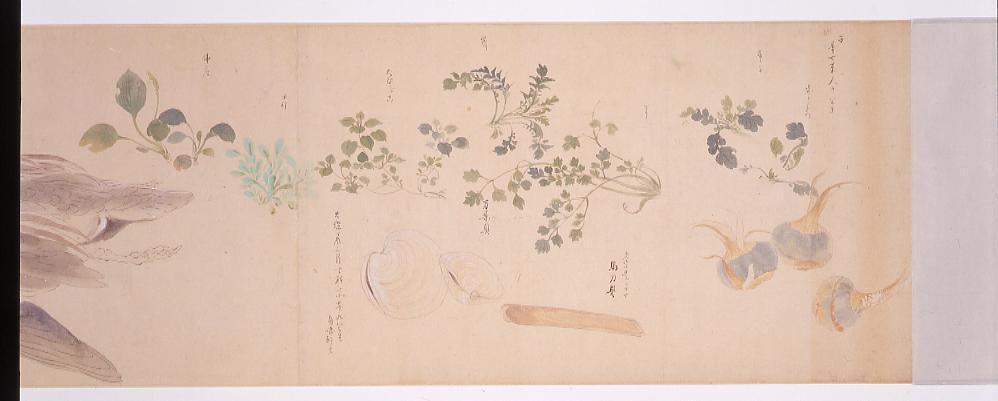 作品画像:鳥魚菜写生図巻