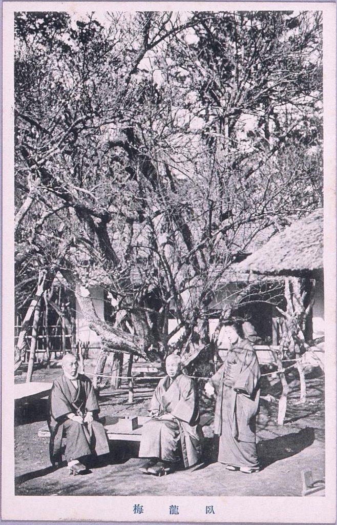 作品画像:臥龍梅(男性2人 女性1人)