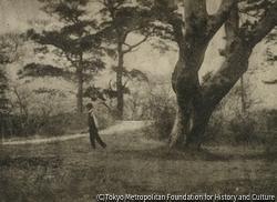 作品画像:大樹のかげ