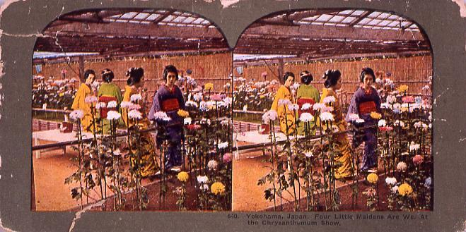 作品画像:Yokohama,Japan.Four Little MaidensAre We.At the Chrysantheumun Show.640