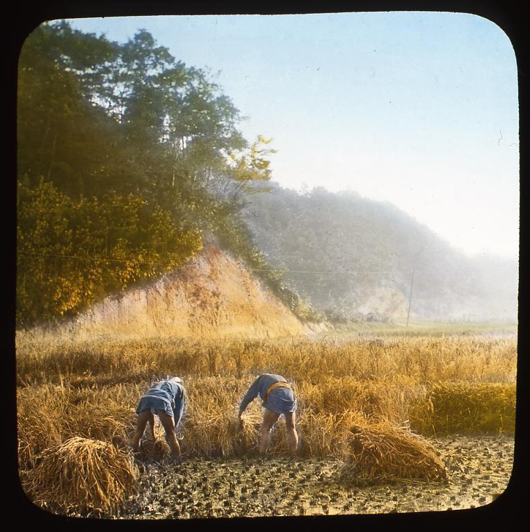 作品画像:稲刈をする農夫たち