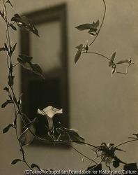 作品画像:(一輪の花と窓)