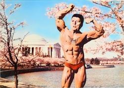 作品画像:(裸体男性と桜)