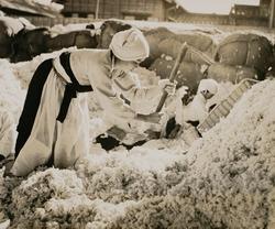 作品画像:「棉をつくる朝鮮婦人の勤労画報」より (2)