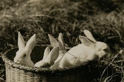 作品画像:(ウサギ)