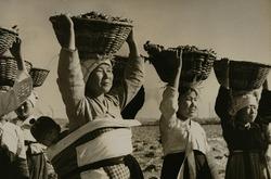 作品画像:「水産日本の宝庫・北鮮の鰯」より (1)