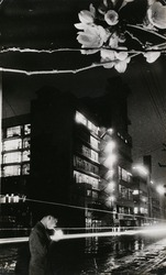 作品画像:(夜の桜・モンタージュ)